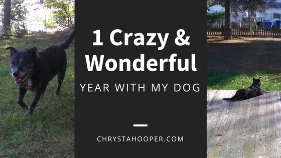 1 Crazy and Wonderful Year With my Dog